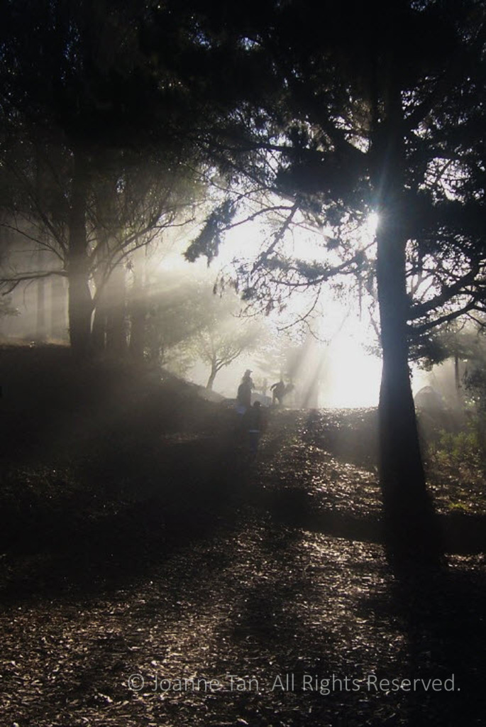 Early morning sunlight streaming through the trees, people climbing towards the light in a forest.